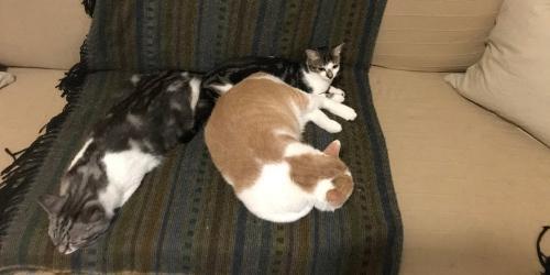 Amici per tutta la vita - Dormire sul divano ...